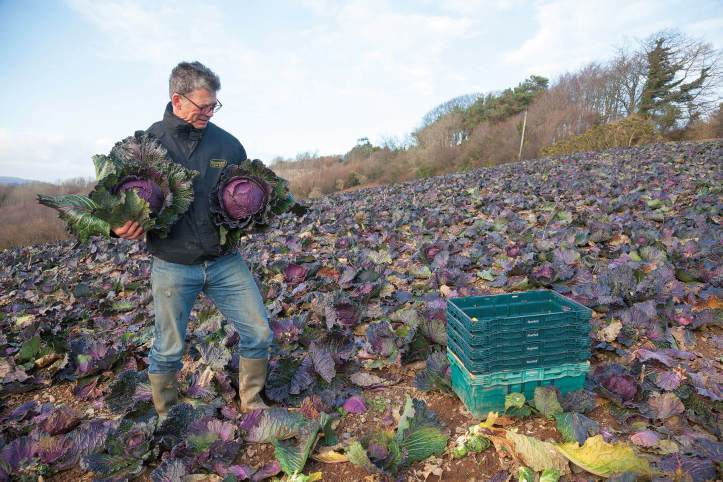 Riverford-founder-Guy-january-king-cabbage-field.jpg
