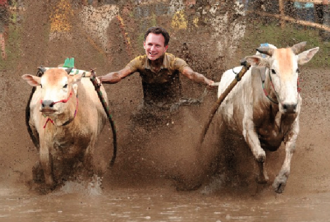 Christian Horner Cow Race